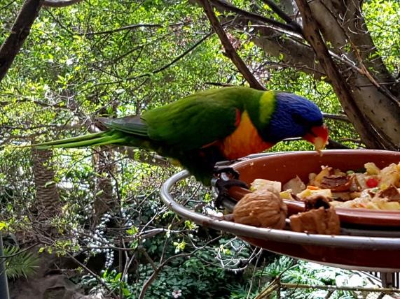 Avarium im Lloro Parque