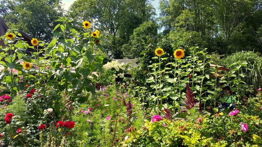Blütenpracht im Spreewald