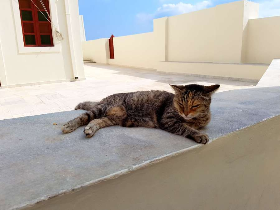 Cats of Santorin